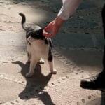 La historia del gato que busca la 'protección' en la Virgen María