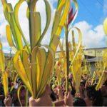¿Para qué se usan las palmas benditas del Domingo de Ramos?