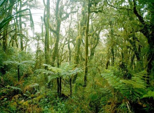 El compromiso profético de la Iglesia: Hacia una ecología integral