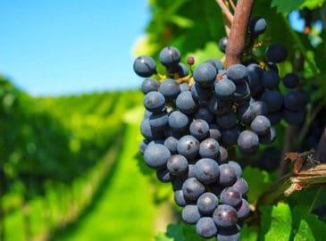 ¿Qué podemos aprender de los jornaleros de la viña (Mt 20, 1-16)?
