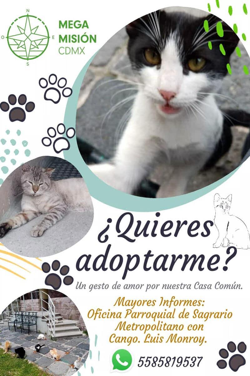 La adopción de gatos es parte de las actividades de la Megamisión 2020. Foto: Ambiente Ecología