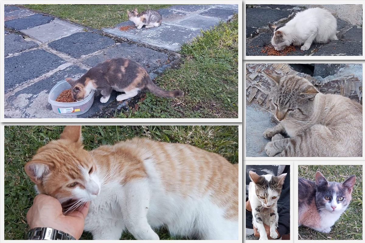 """""""Adopta un gato"""", proyecto de la Catedral en la Megamisión"""