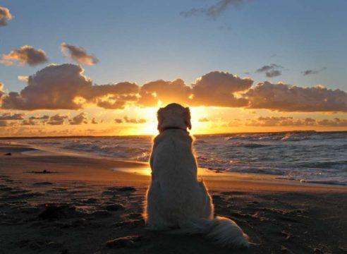 ¿Las mascotas van al cielo? Esto dice la Iglesia católica