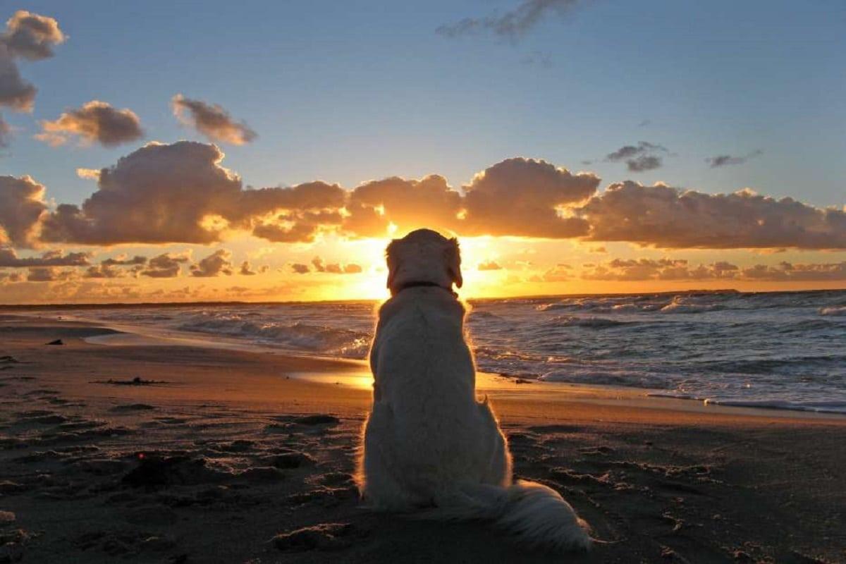 ¿Qué dice la Iglesia cuando alguien se pregunta si las mascotas van al cielo? Foto: Especial