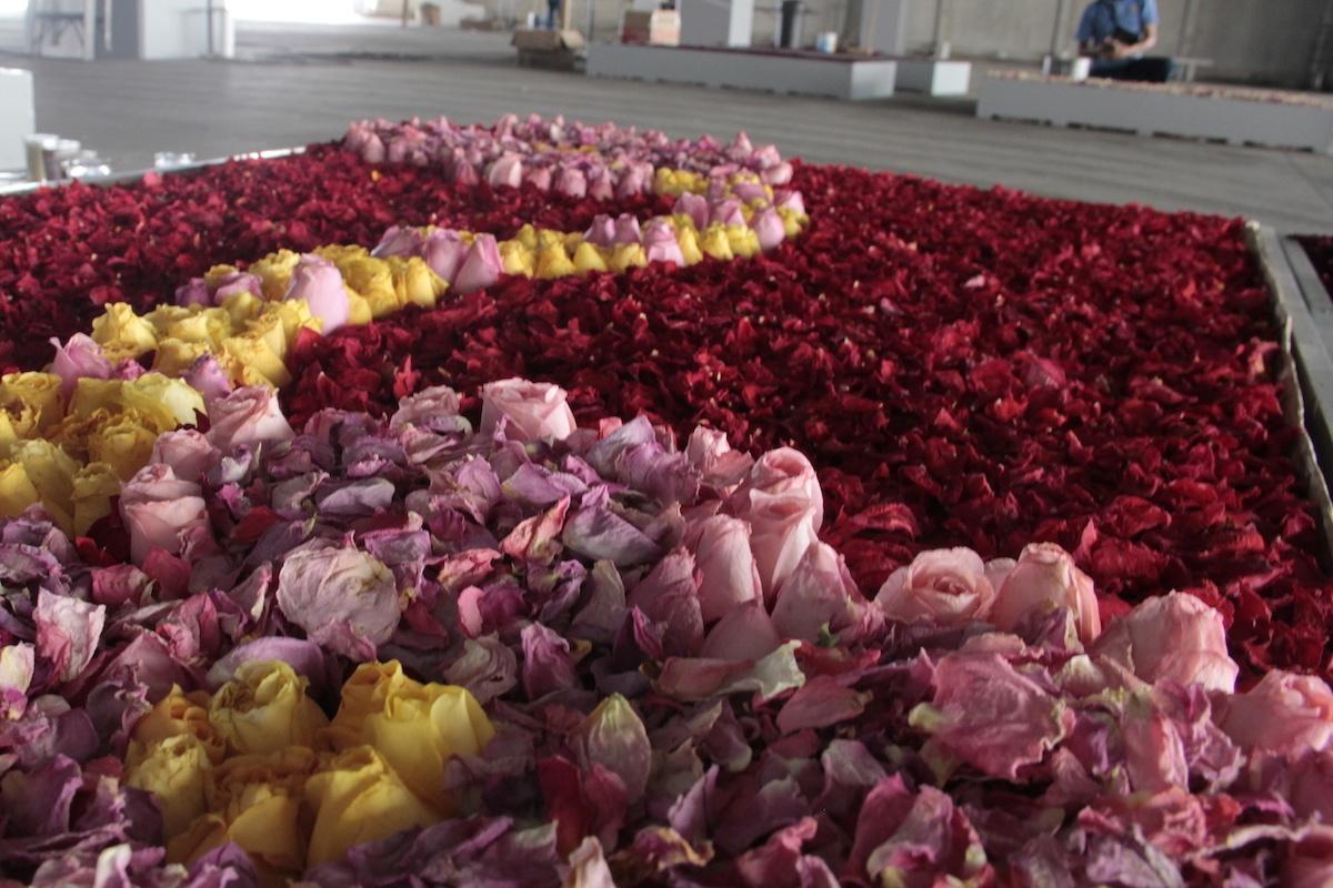 Con flores que los fieles llevan a la Virgen de Guadalupe, empleados de Basílica elaboran un tapete monumental.