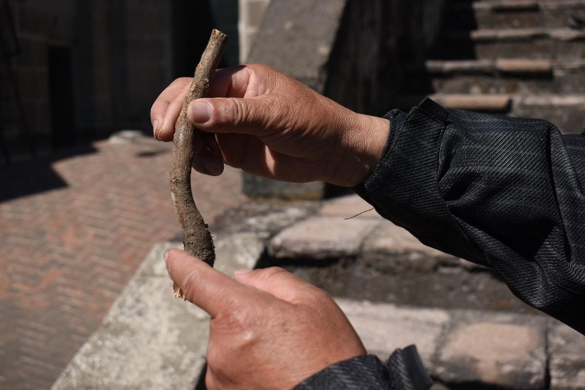 Cortar el árbol, secar el tocón y desprender la raíz, una técnica mexicana, novedosa y efectiva.