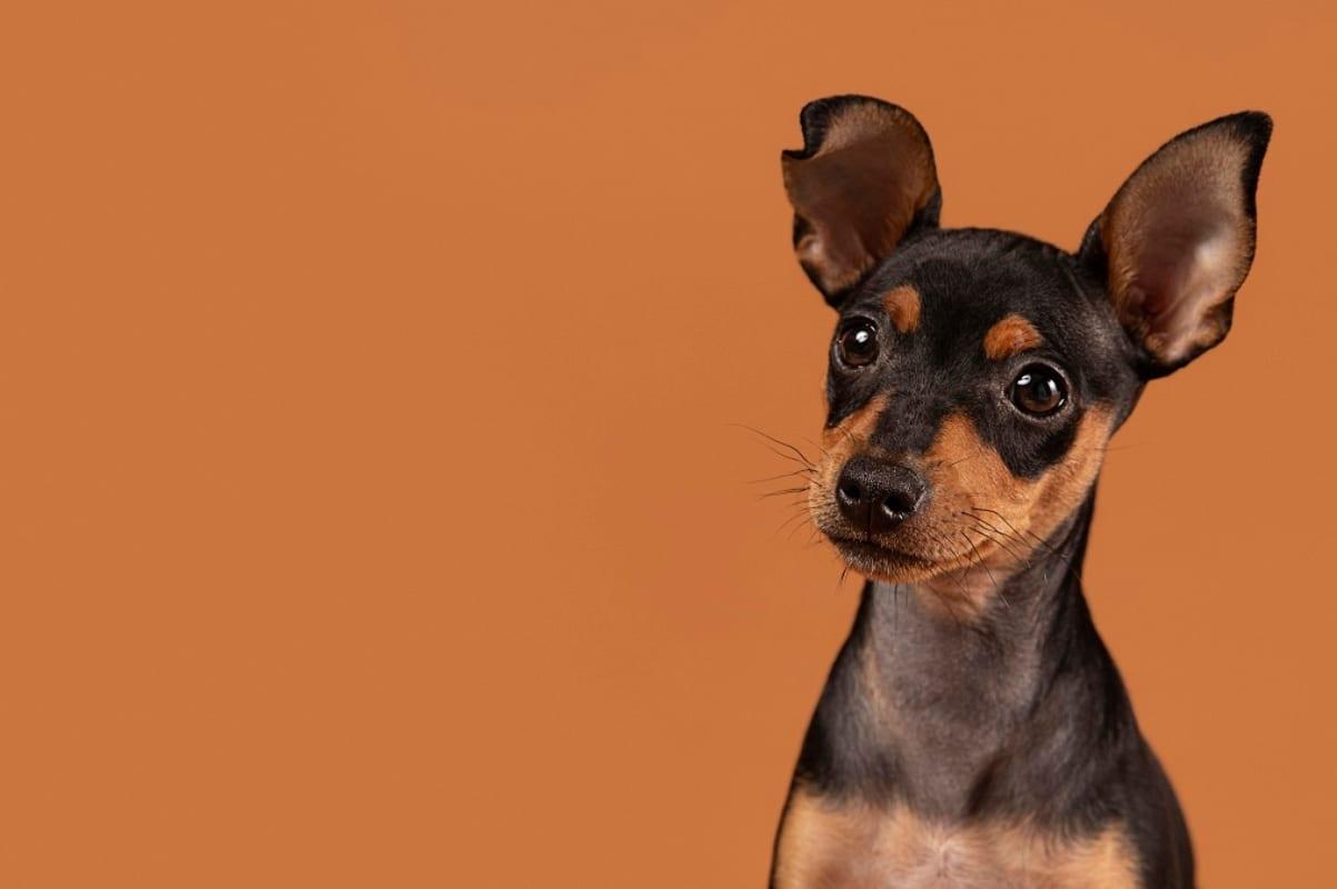 Adoptar a un animal es un signo de caridad y humanidad. Foto: Freepik.
