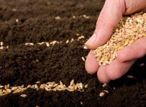 Parábola de la siembra y la cosecha, ¿qué aspectos recalca Jesús?