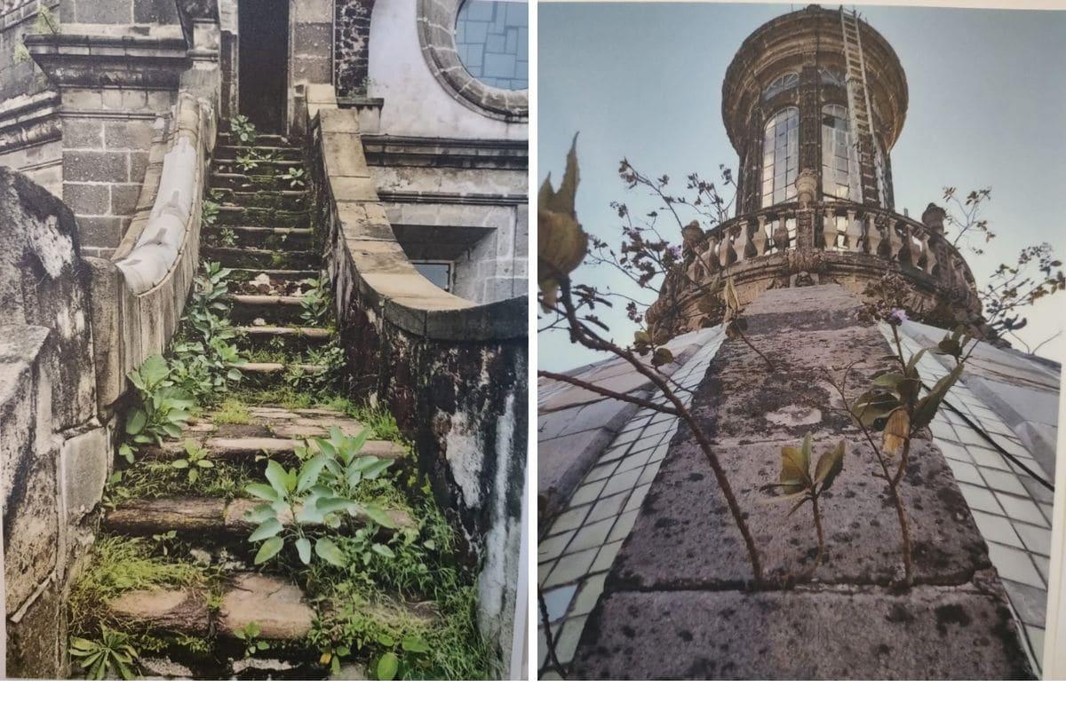 Parte de la flora nociva que había en Catedral. Lamentablemente las plantas pueden ser muy 'agradables a la vista', pero dañan severamente los edificios. Fotografías expuestas en Catedral.