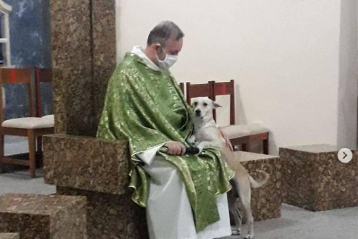 El padre João Paulo recoge perros callejeros, animales que después da en adopción a los fieles.